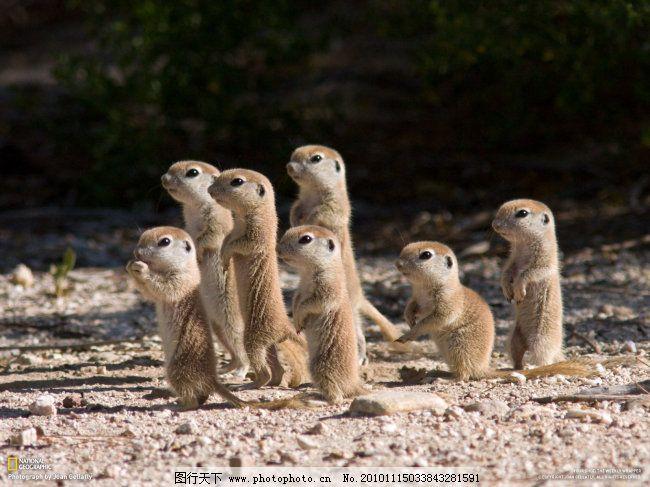 可爱的小动物们