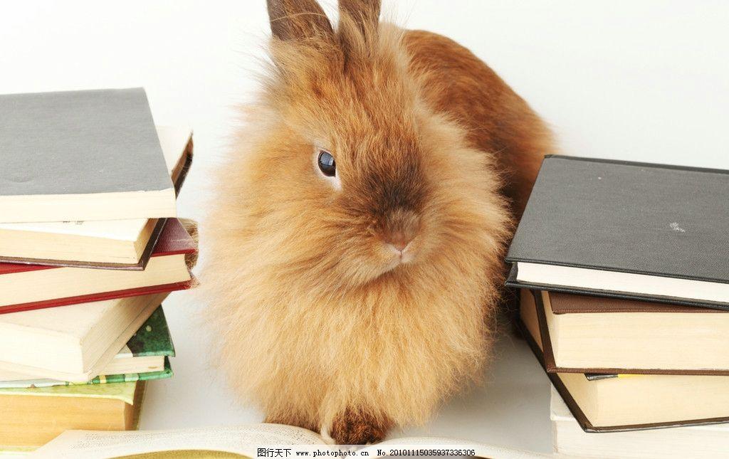 兔子 小兔子 小灰兔 可爱 兔年素材 兔兔 宠物 看书的兔子 可爱的兔子
