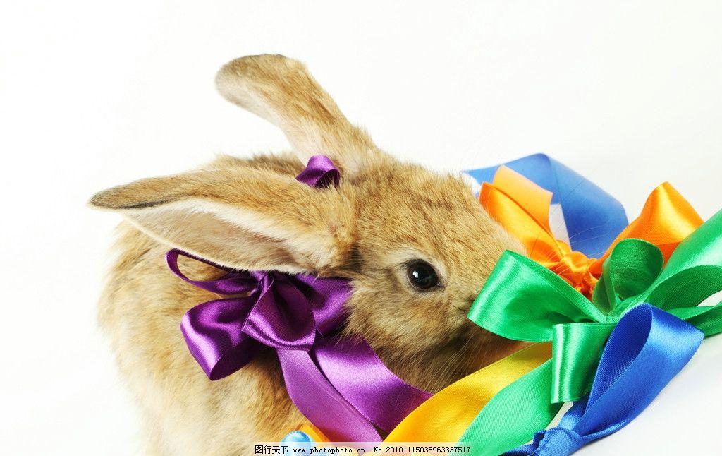 兔子 小兔子 兔年素材 兔兔 丝带 彩色丝带 蝴蝶结 可爱 宠物 可爱的