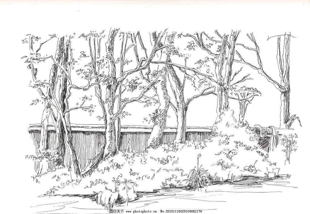 钢笔速写 钢笔画 速写 手绘 树 风景 环艺 景观设计 环境设计 设计