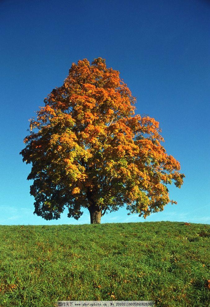 单树t型结构无源电路