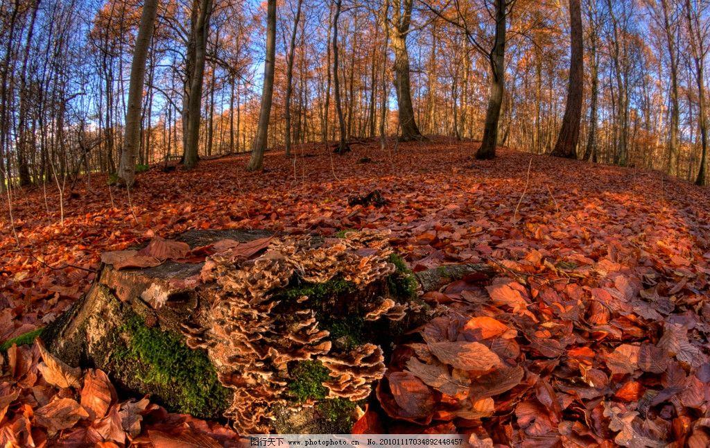 秋天的树林 满地的树叶图片