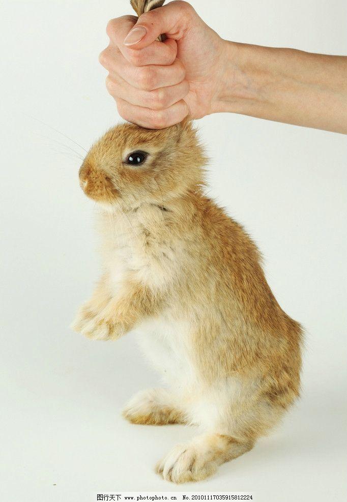 兔子 小兔子 兔年素材 兔兔 乖乖兔 手拎着兔子 手 可爱的兔子 可爱