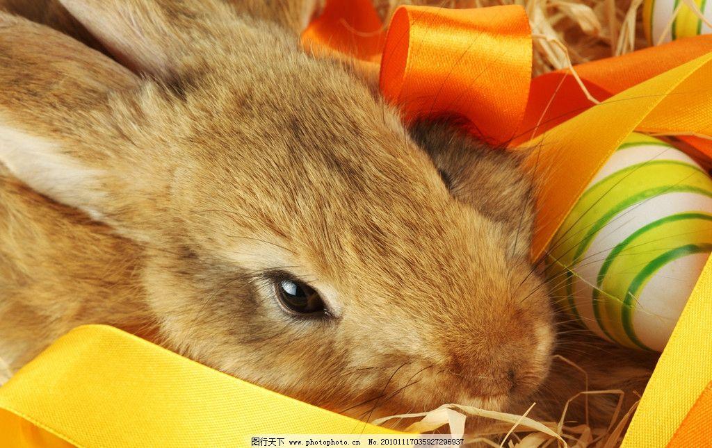 兔子 乖乖兔 小兔子 兔年素材 兔兔 可爱的兔子 漂亮的兔子 可爱 宠物