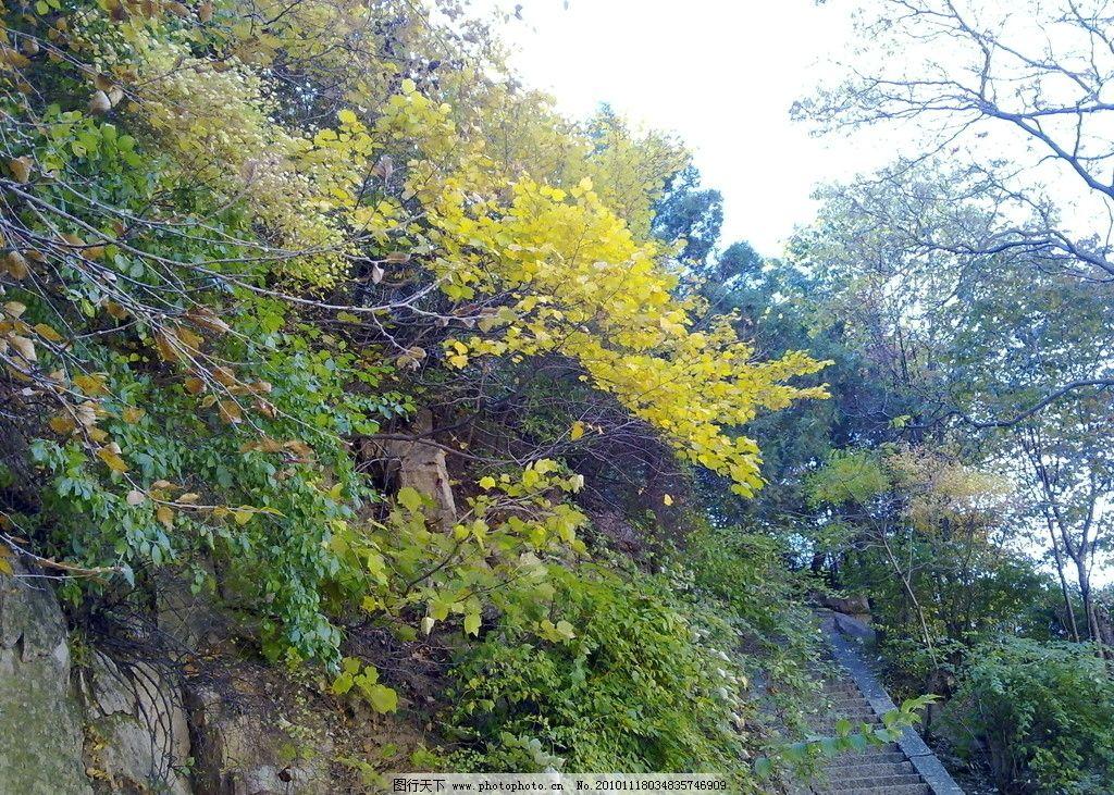 秋色 崂山 秋天的风景 秋天 自然风景 自然景观 摄影 300dpi jpg