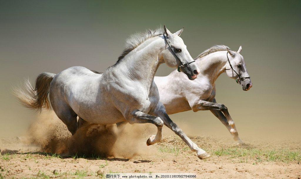 野生动物  奔跑的骏马 奔跑 骏马 白马 草原 辽阔 宽阔 大自然 动物