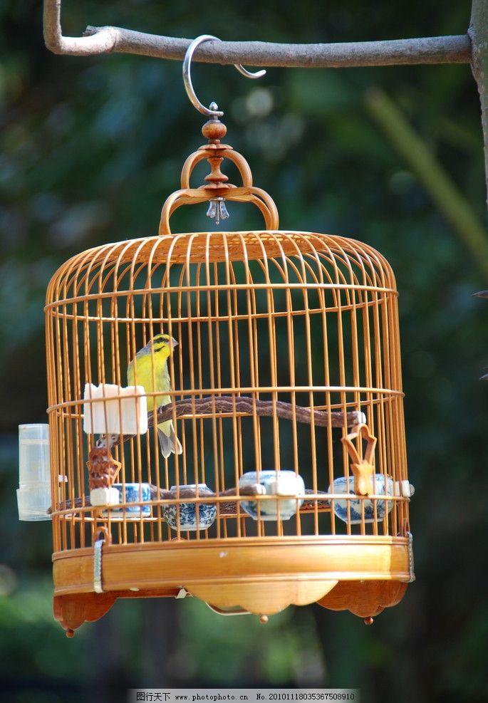 鹦鹉 画眉 鸟笼 遛鸟 鸟类 生物世界 摄影 72dpi jpg