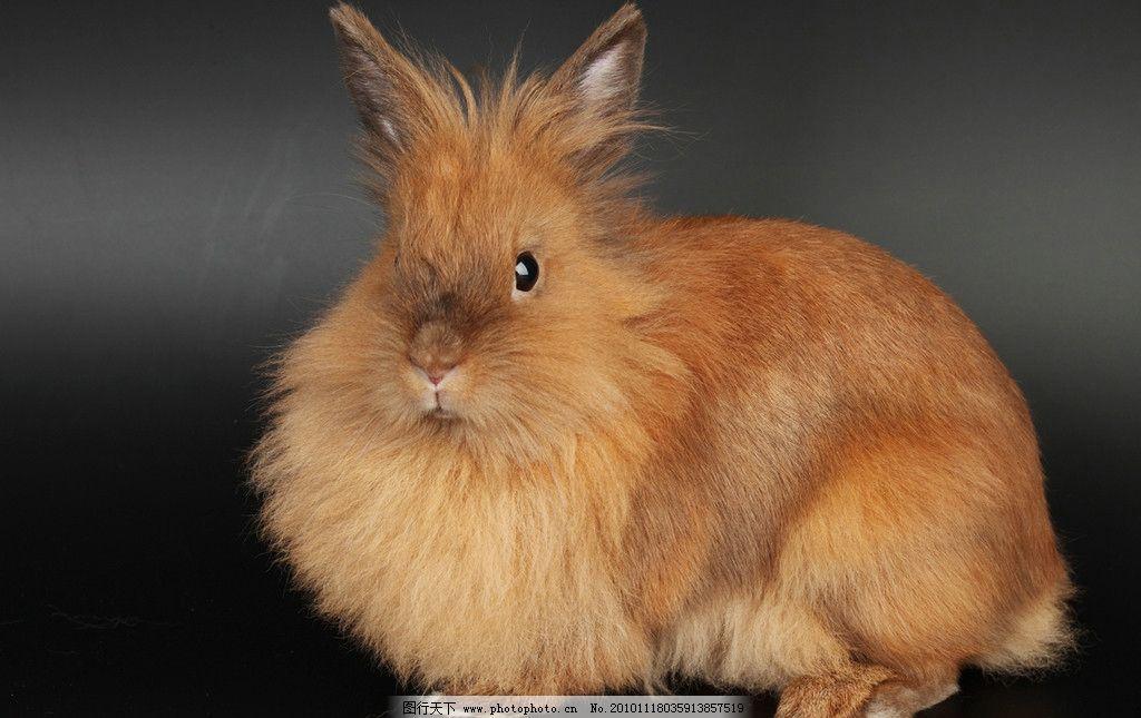 兔兔 可爱的兔子 长毛兔 可爱 宠物 兔子窝 家禽家畜 动物 兔子图片