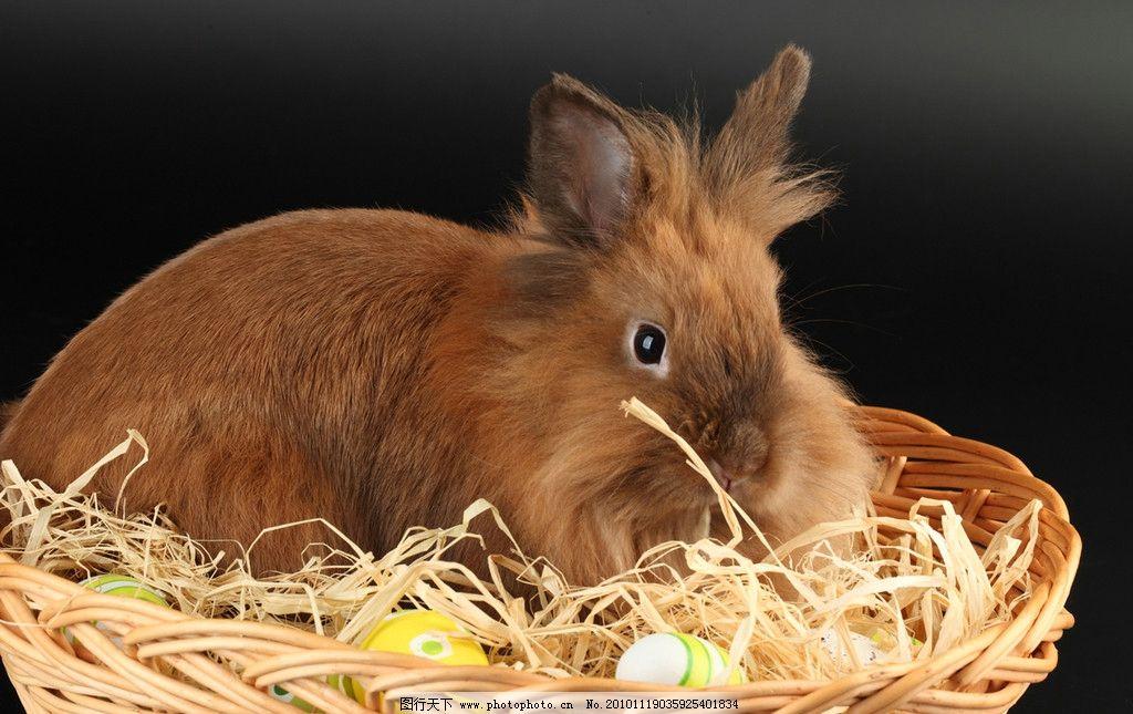 小兔子 兔年素材 可爱 宠物 可爱的兔子 兔年生肖素材 家禽家畜 动物