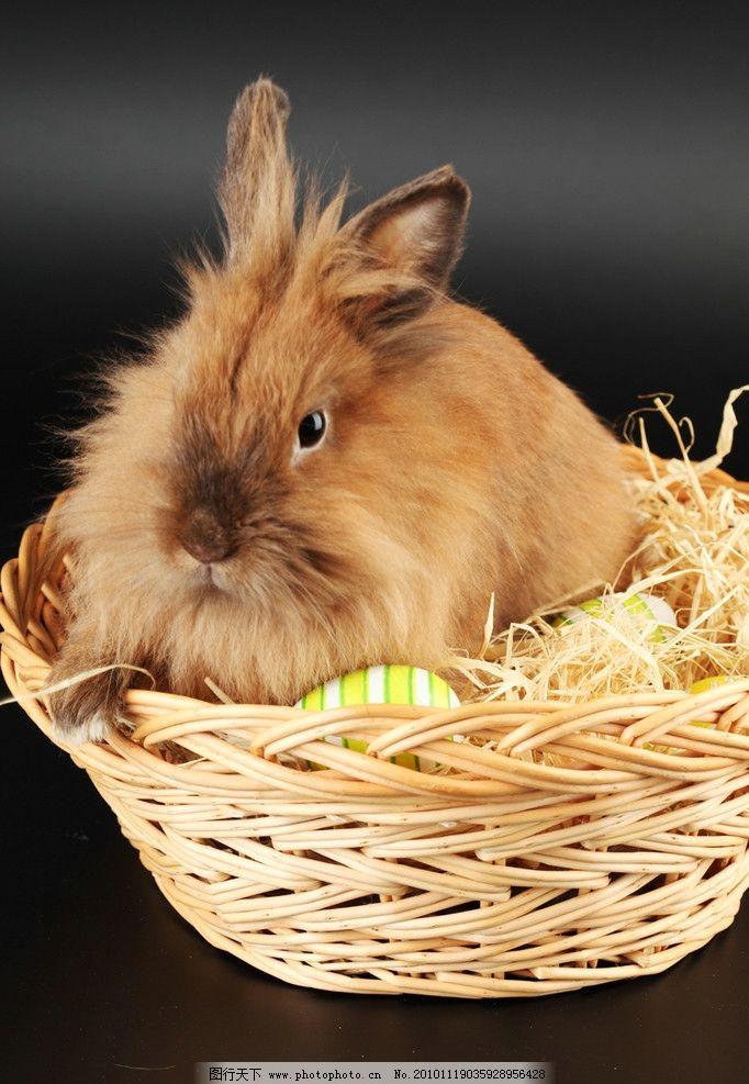 兔子 小兔子 兔年素材 可爱 宠物 可爱的兔子 兔年生肖素材 动物