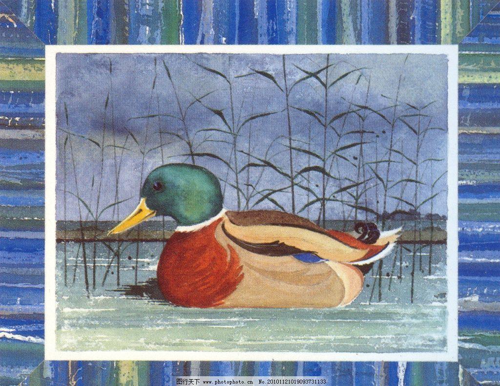 手绘鸭子 鸭子 田园手绘 田园鸭子 彩色鸭子 欧式田园 绘画书法 文化