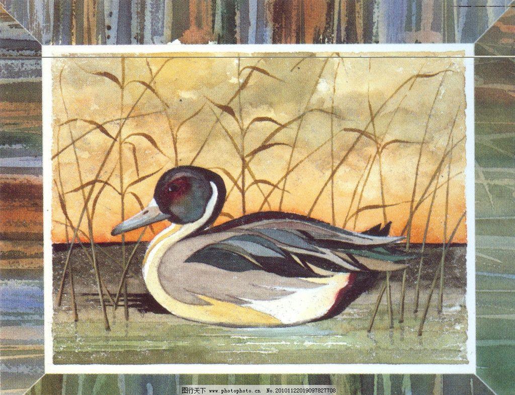 手绘鸭子图片