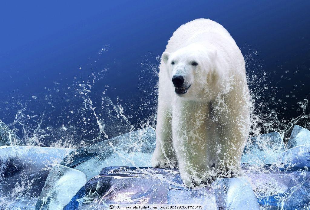 北极熊高清图片_野生动物