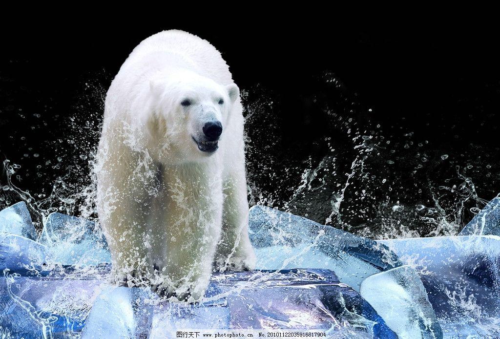 北极熊高清图片