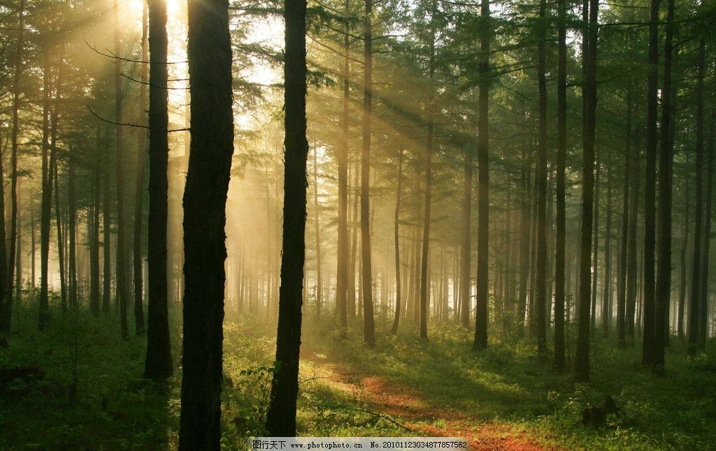 透过阳光看森林图片