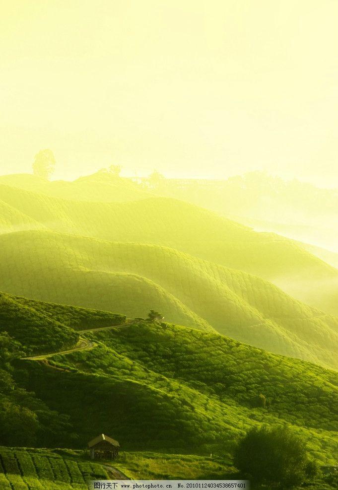 自然风景 茶园 山峦 晨曦 茶山 田园风光 自然景观 摄影 300dpi jpg