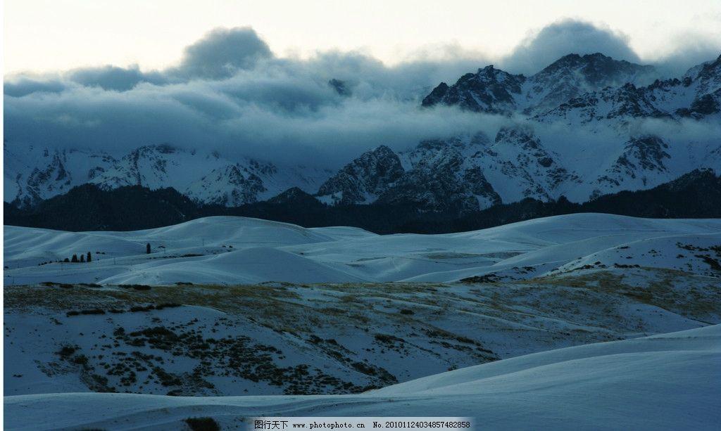雪山 雪地 雪山山丘 黄麦碴 塔松 白云 云雾 自然风景 自然景观 摄影