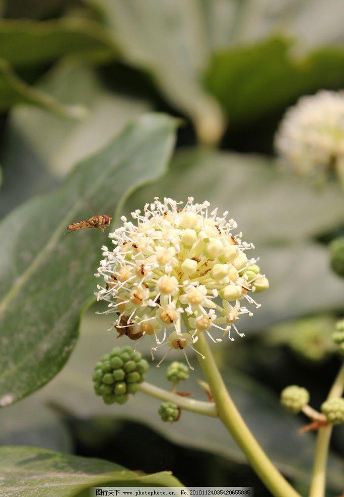 植物和昆虫图片