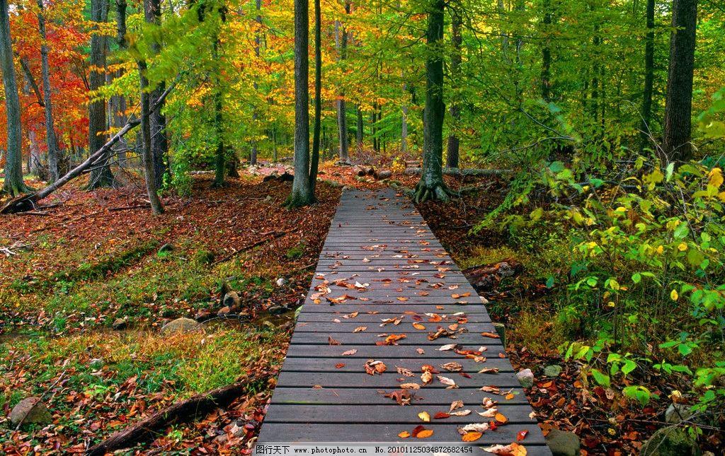 树林落叶 秋景 秋天 落叶 树林 小路 树木 叶子 自然风景 自然景观
