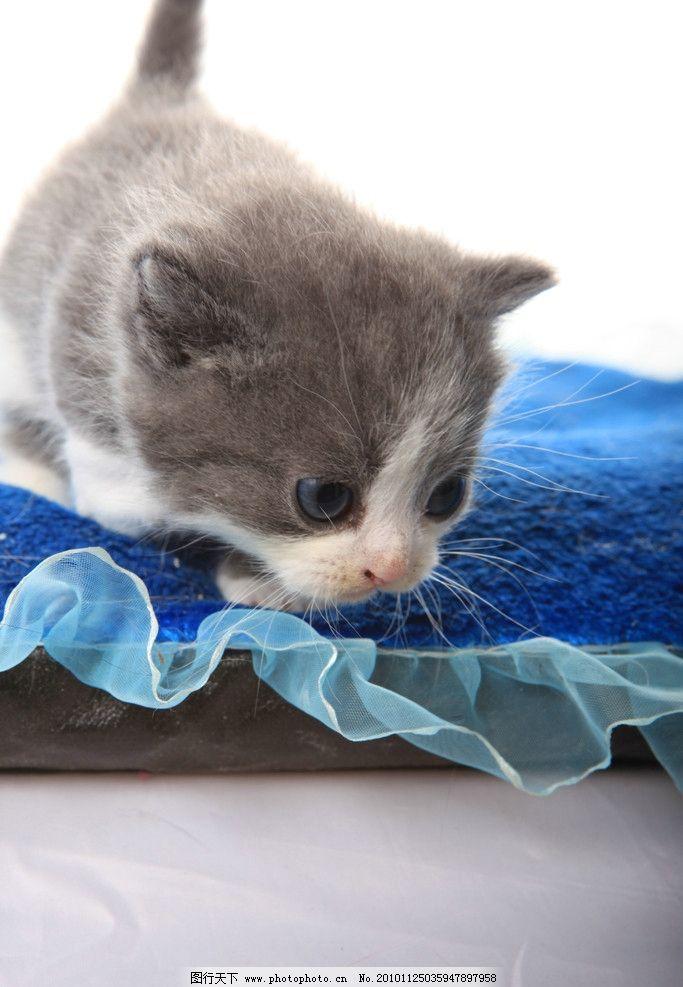 可爱猫咪 猫 小猫 小花猫 家禽家畜 生物世界 摄影 72dpi jpg