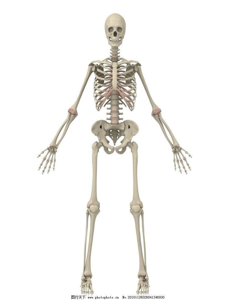 人体骨骼透视图 医疗 人体 骨骼 医疗护理 现代科技 设计 300dpi jpg
