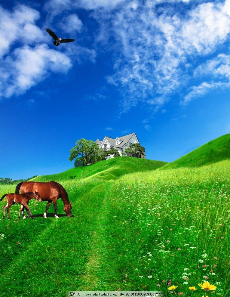 草原风景 草 花 蓝天 白云 老鹰 马吃草 房子 风景 psd分层素材 源