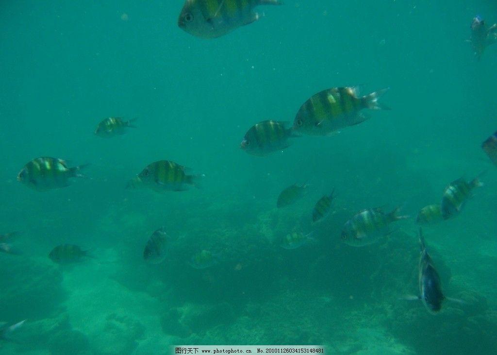 泰国风景 鱼 水底风景 旅游摄影