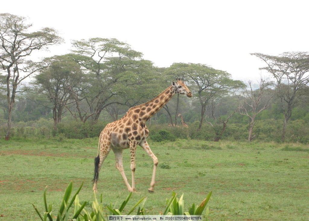野生动物保护区