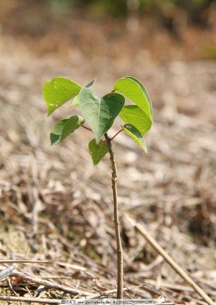 幼儿园小树发芽