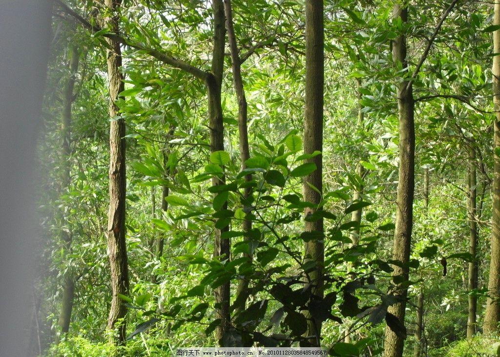 树林 绿色 植物 阳光 风景 树木树叶 生物世界 摄影 96dpi jpg