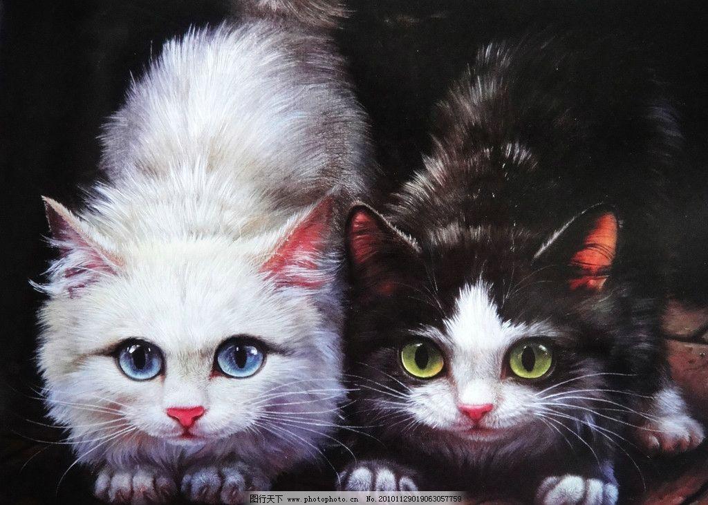小猫图片,花猫 油画 写实 油画技法 可爱 白猫 黑猫