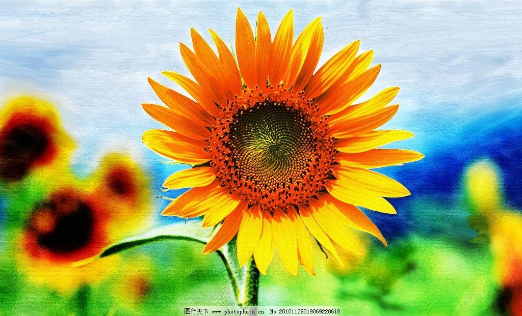 油画向日葵 向日葵油画 油画 手绘 现代画 水彩画 水彩 油画绘画 绘画