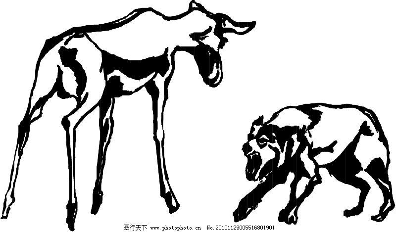 野生动物3606