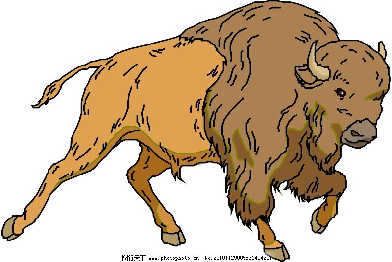 野生动物4036_其他_矢量图_图行天下图库