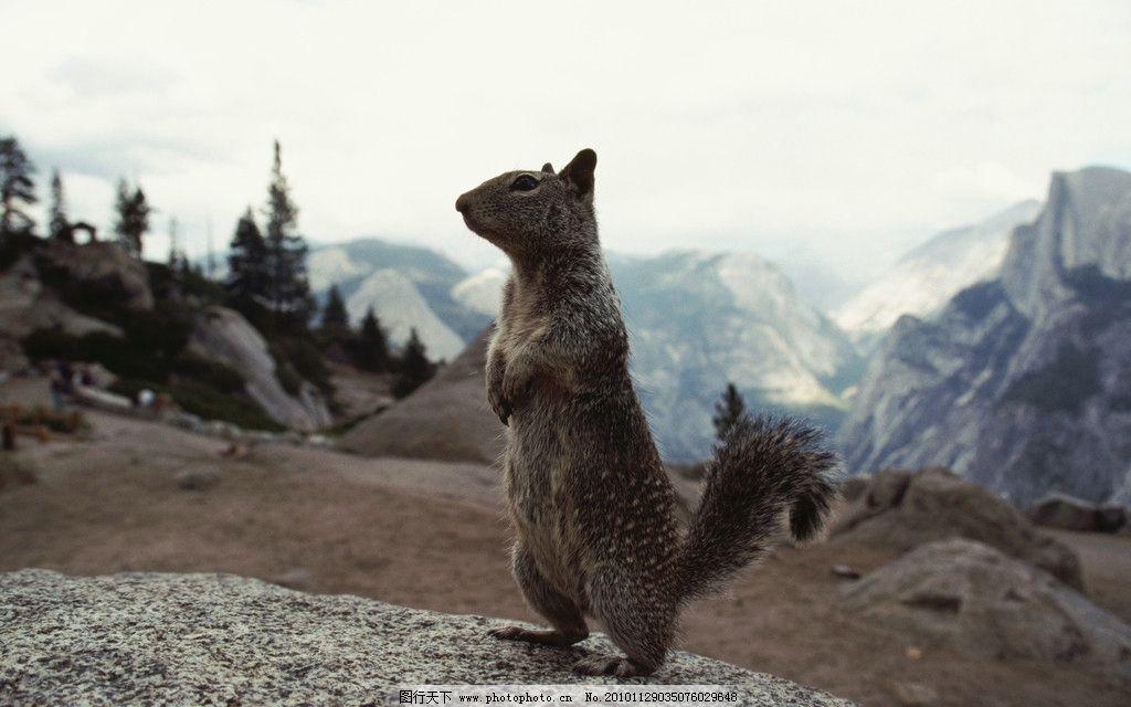 可爱动物 岩石 松鼠 高山 山峦 野生动物 生物世界 摄影 300dpi jpg