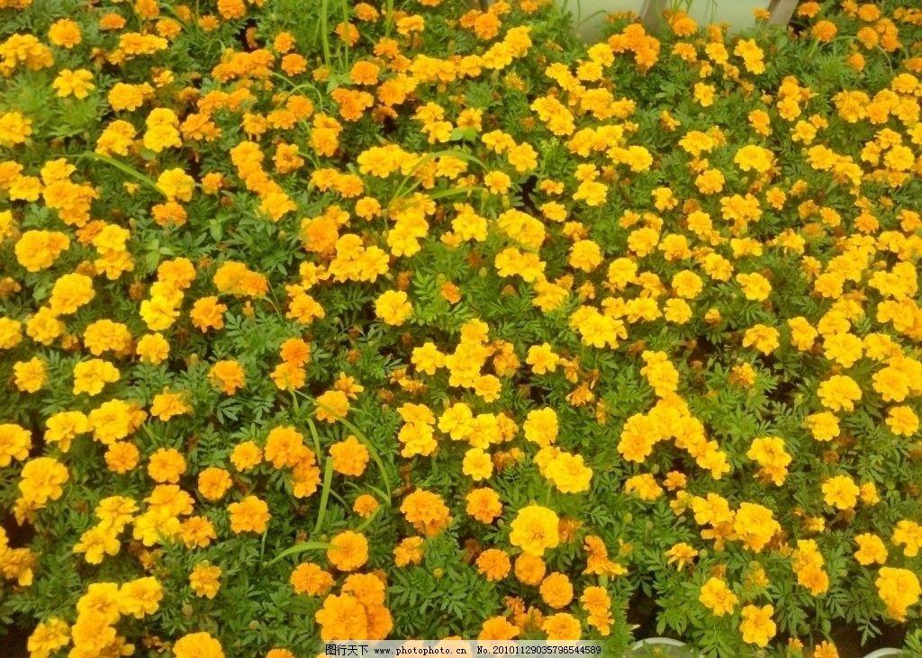 廣場之黃花 小黃花 花叢 綠葉 風景 國內旅游 旅游攝影 攝影
