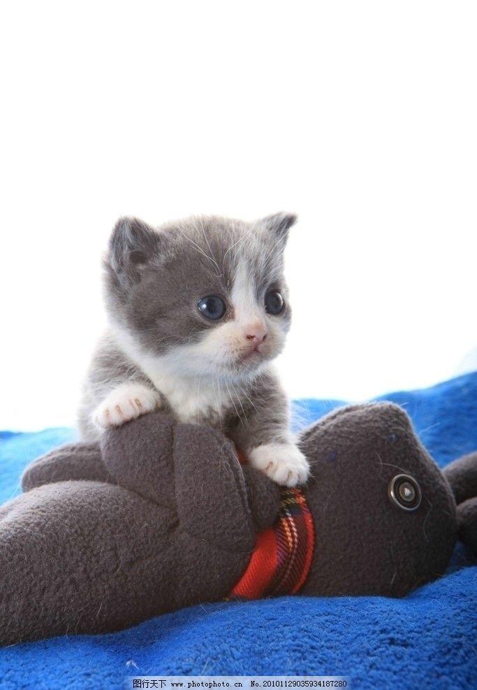 可爱小猫 猫咪 可爱的猫 小花猫 宠物 其他生物 摄影