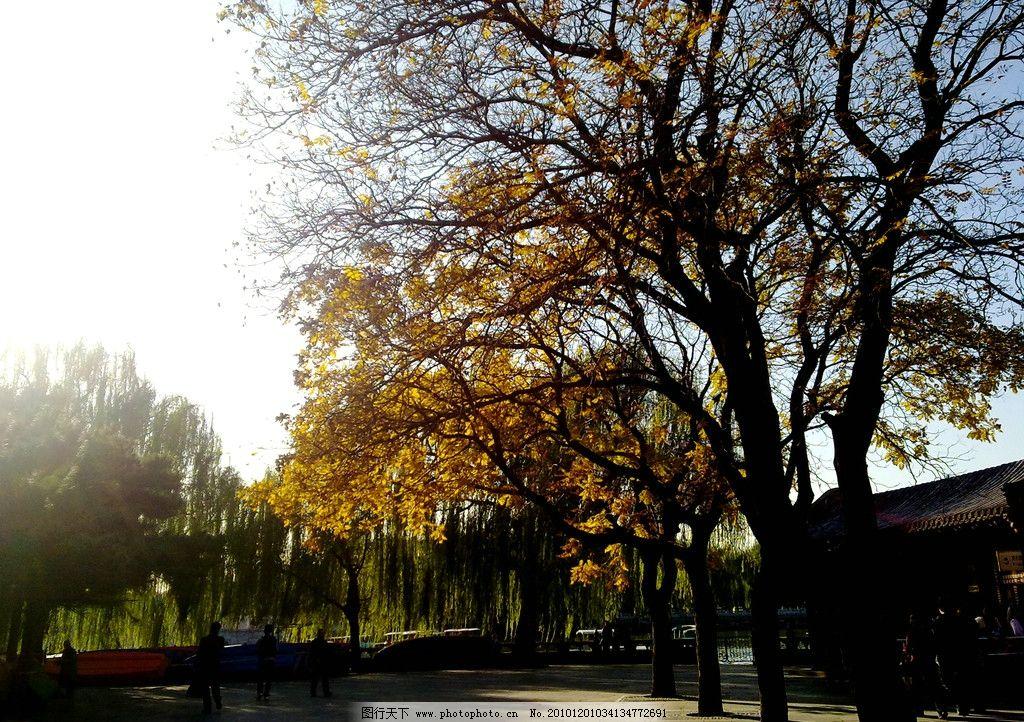 北海 北海公园 深秋 南门 树木 秋天 落叶 自然风景 旅游摄影 摄影