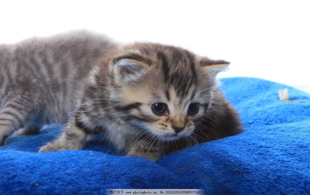 小猫 三只小猫 可爱小猫咪 小花猫 摄影