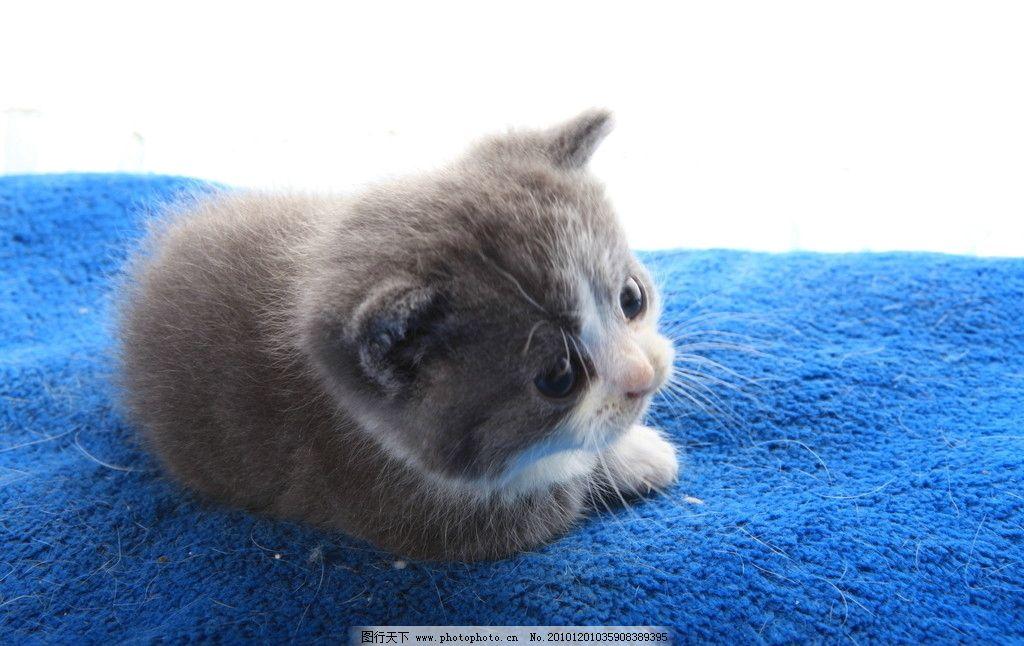 懒猫咪 猫 可爱猫咪 小猫 小花猫 家禽家畜 生物世界 摄影 72dpi jpg