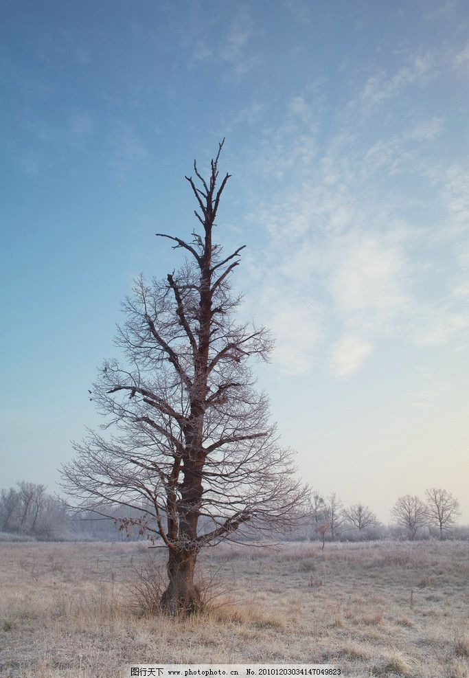 树木 枯树 冷漠 冷树 凋零 枯萎 枝 树木树叶 自然风景 旅游摄影