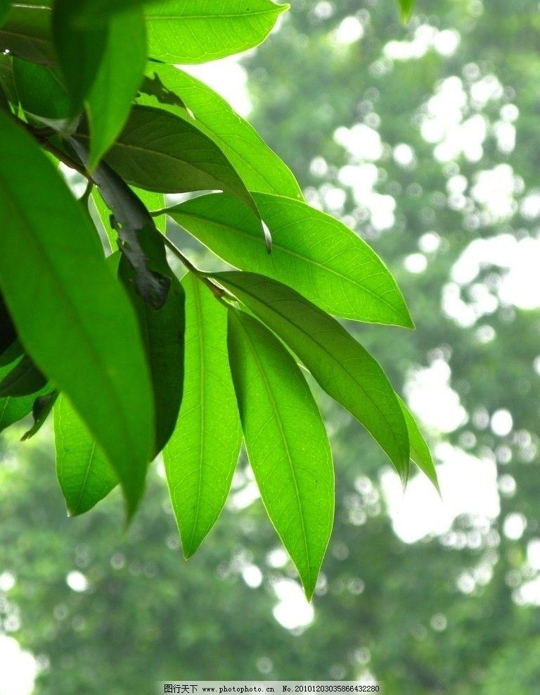高清树叶子图片