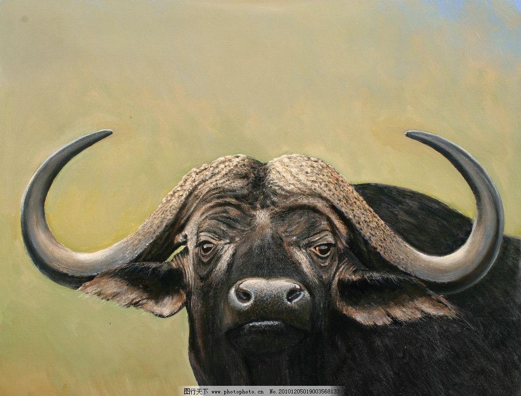 油画非洲水牛 油画 非洲水牛 动物画 非洲 绘画书法 文化艺术 设计