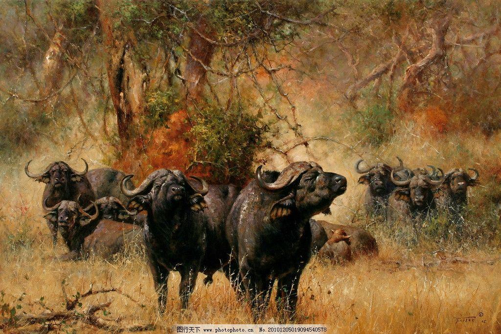 油画非洲水牛 油画 非洲水牛 动物画 非洲 绘画书法 文化艺术 设计 72