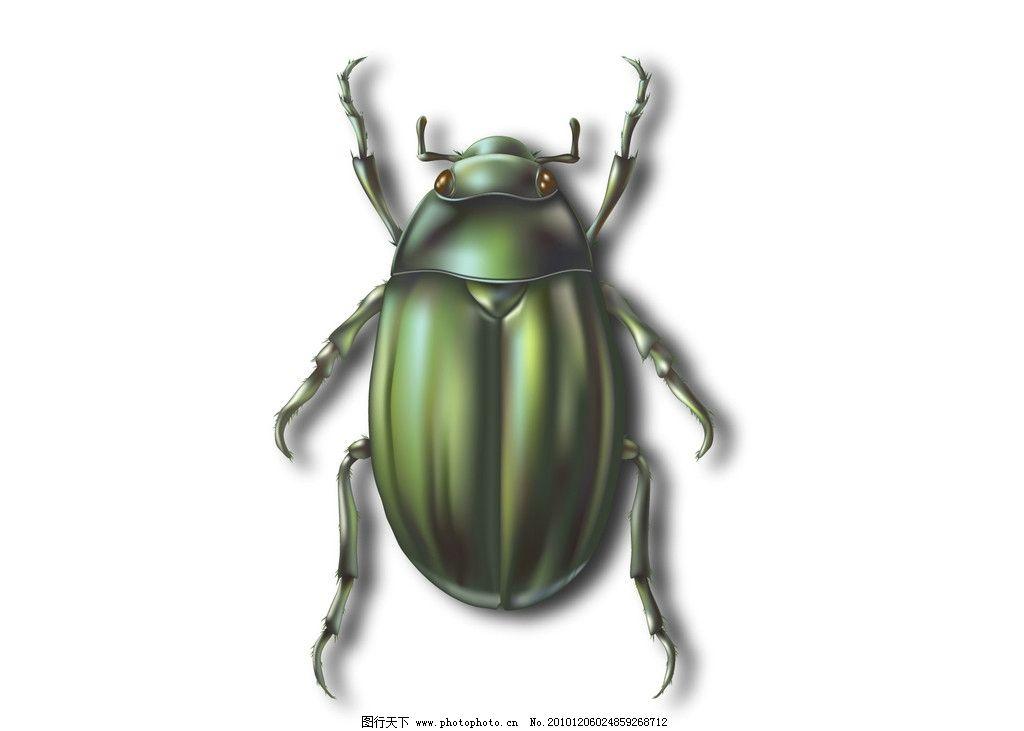 矢量甲壳虫 昆虫 节肢动物 甲壳 虫子 触角 绿色 墨绿 爬虫 金龟子