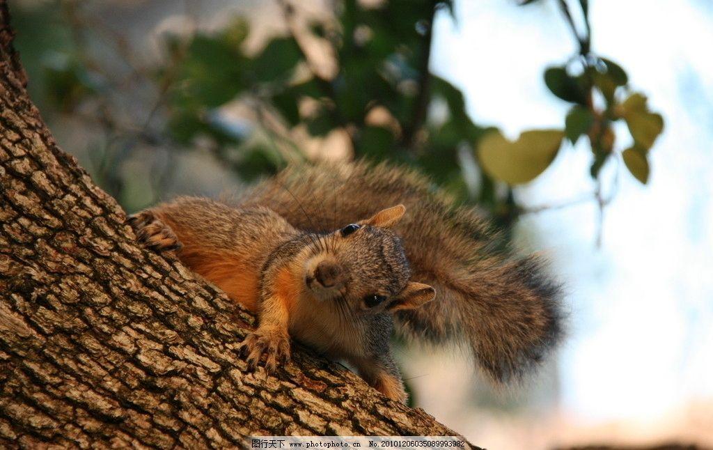 小松鼠 动物 树木 绿叶 自然 生物 环保 摄影