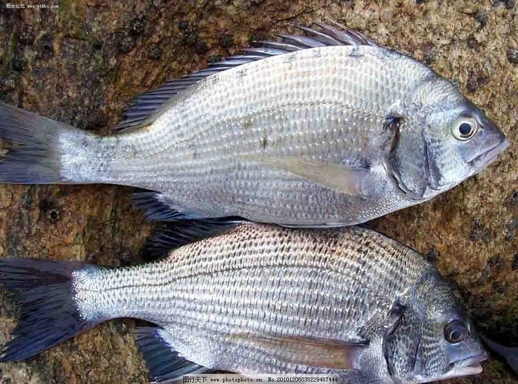壁纸 动物 鱼 鱼类 1024_760