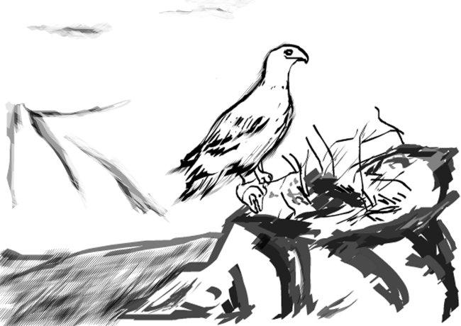 植物背景 动物植物素材 鸟窝 鸟巢 鸟类 山水 山水风景 山水国画 山水