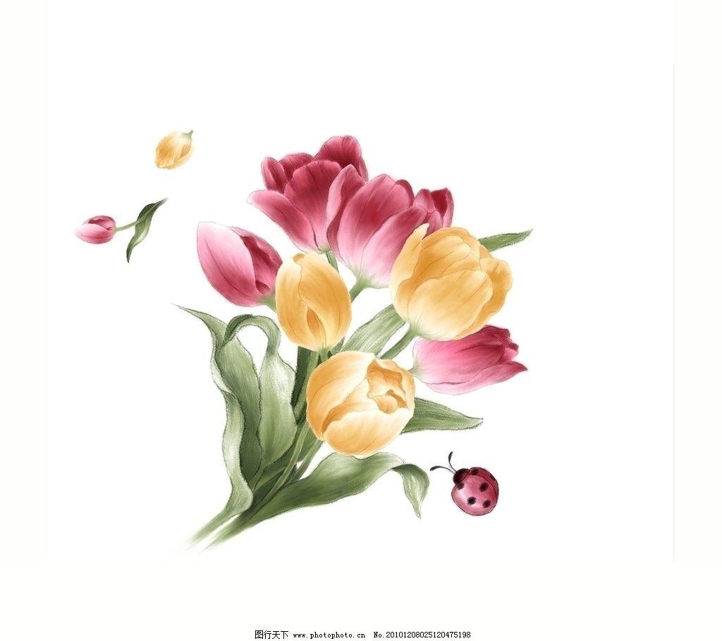 素描图片 花朵 郁金香展示