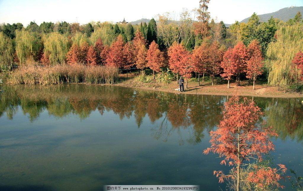 南京梅花山的秋天 南京 梅花山 秋天 中山陵 景区 红叶 湖光山色 灿